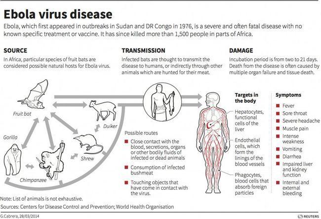 Die Ursachen Ebola