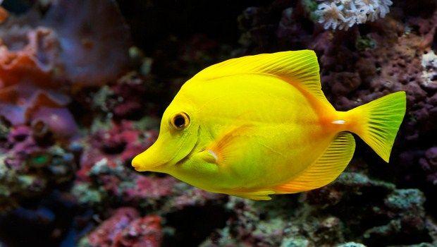 Hausmittel für'inflammation-poissons