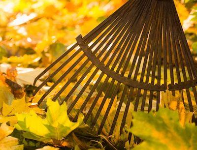 harkt Blätter