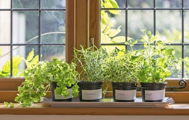 Kleine Kübelpflanzen
