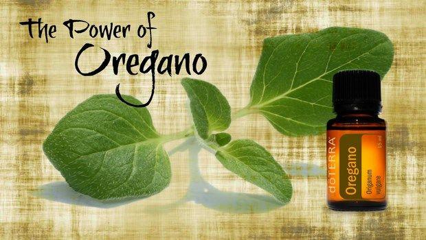 Hausmittel für'huile d'origan douleurs à la poitrine-