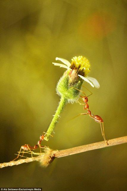 Kleine rote Ameise beweist, dass Blumen sind nie aus der Mode!