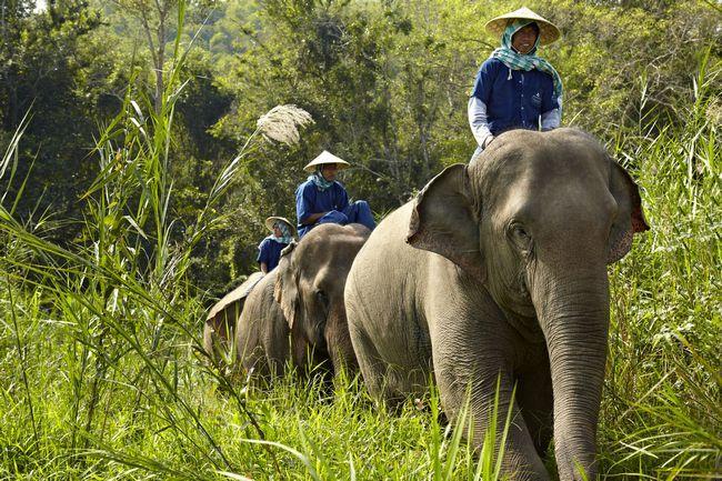 Wenn Sie Ihren Urlaub ist von sich selbst zu nehmen und Elefanten