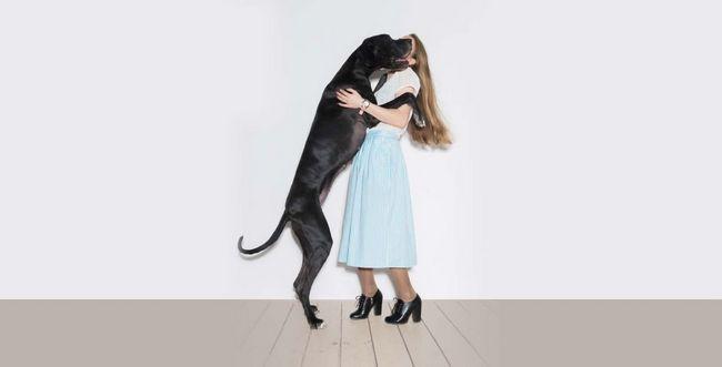 Pet Gründe für einen großen Hund