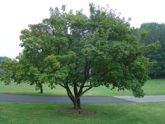 Kleine Bäume für den Garten