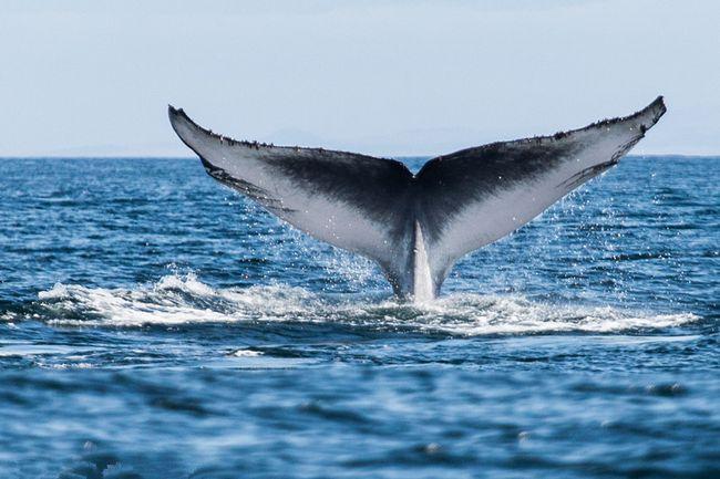 Arten von Walen