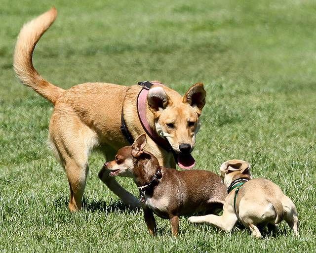 Möglichkeiten, Ihren Hund und Landschaft spielen zu helfen, gut zusammen