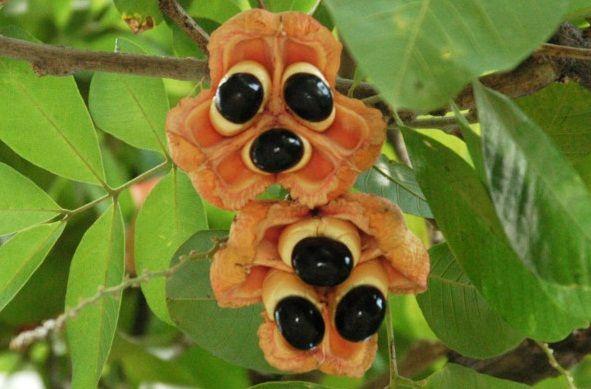 seltsame Frucht