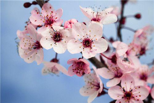 Willkommen Pflanze Feng Shui