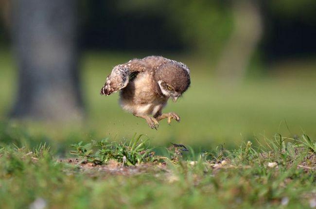 Was ein Baby Vogel zu füttern