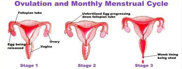 Warum Mädchen haben Perioden